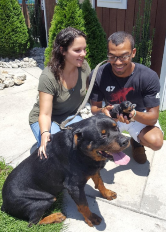 Purebred rottweiler puppies, Greenville, NC,